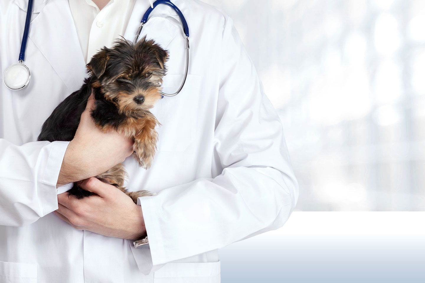 Sick as a Dog: Pet Emergencies in St. Augustine