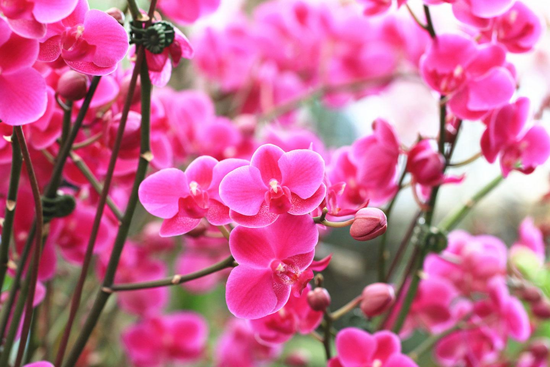 Flowers in St. Augustine