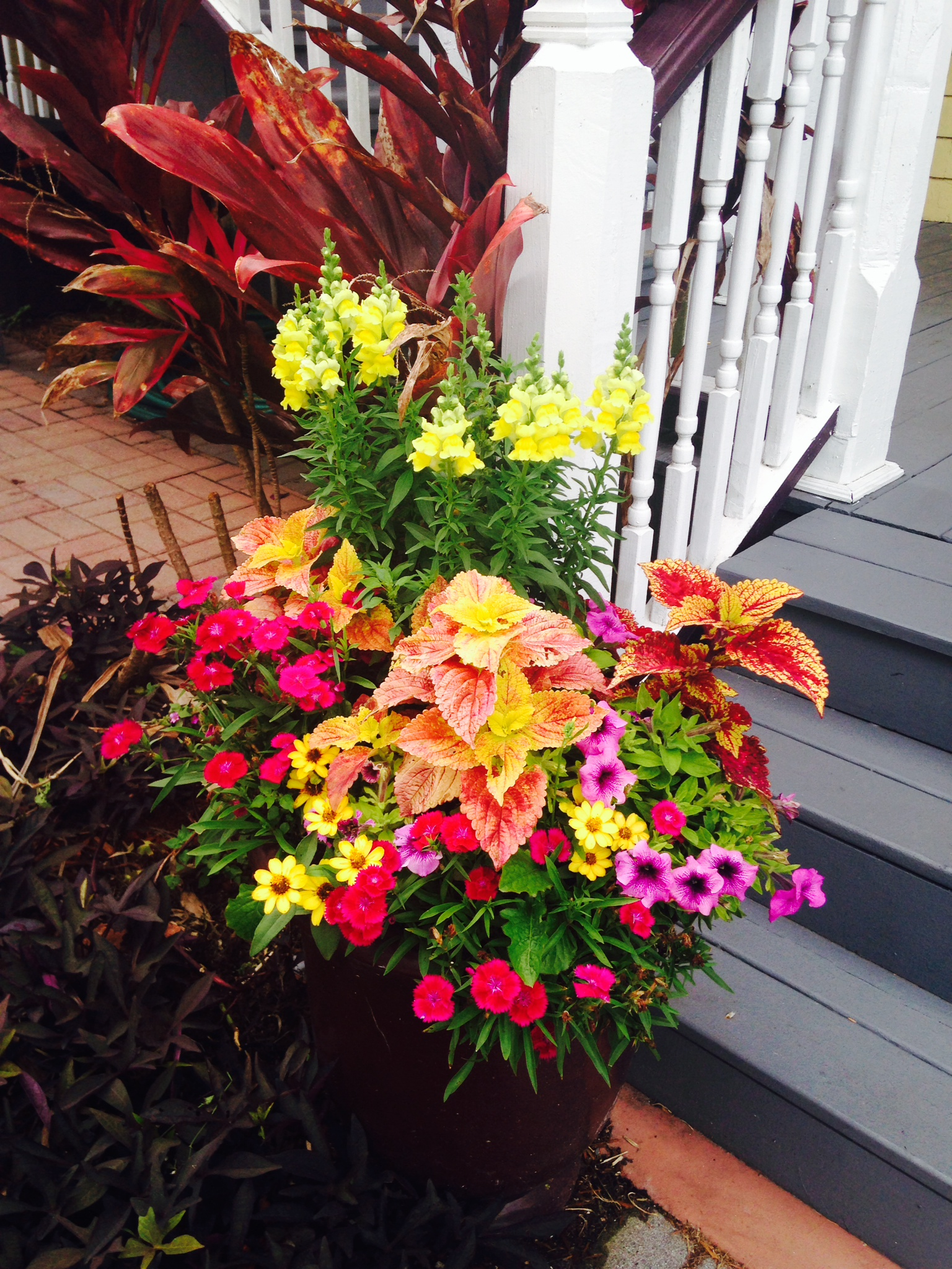 Walk In Garden Box: Flowers At The Bayfront Marin House In St. Augustine Florida